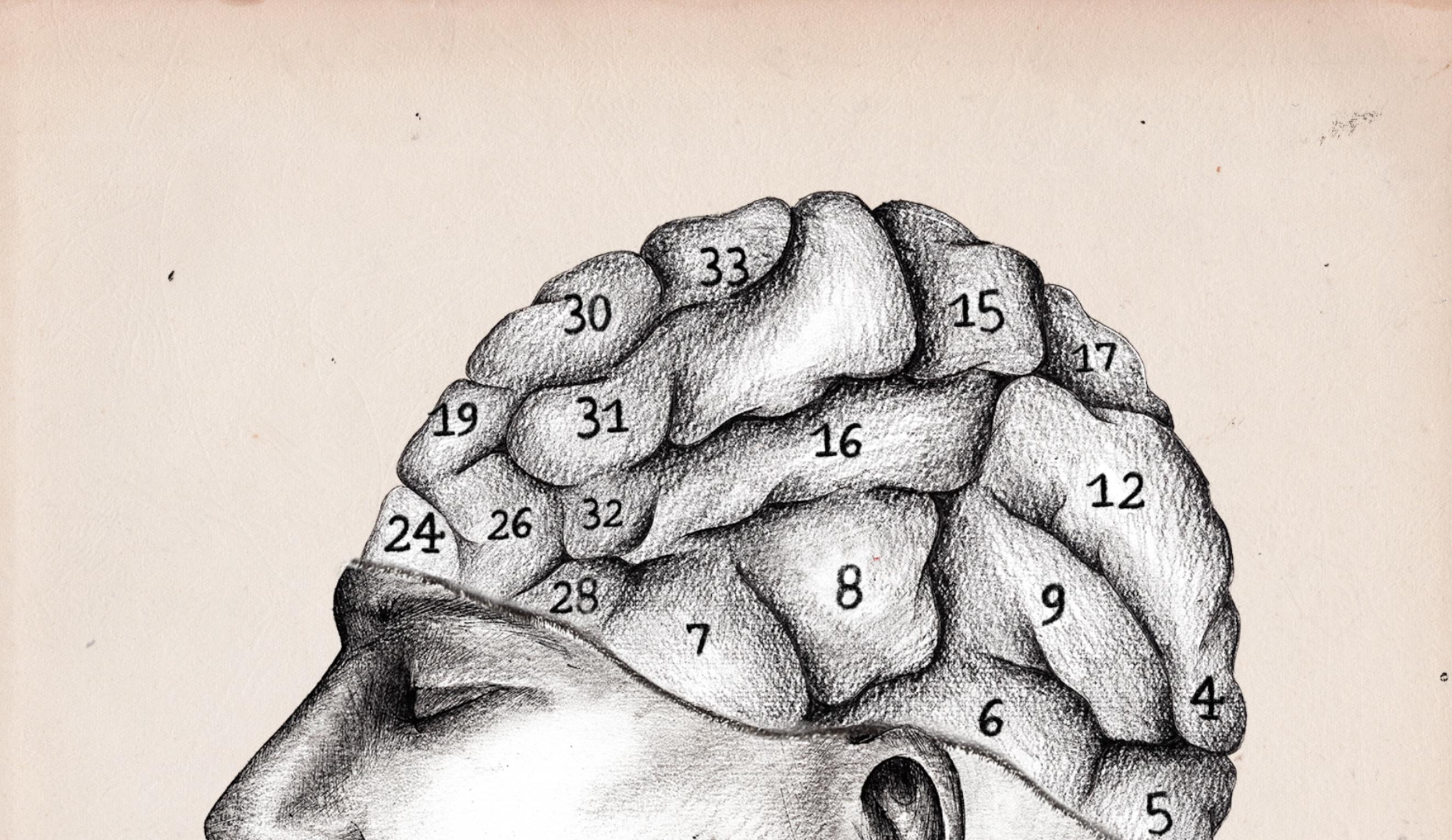 phrenologie_dessin2